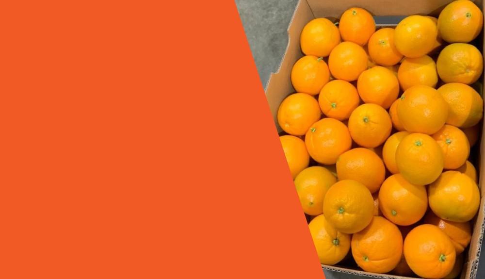 Naranjas de Primera Calidad